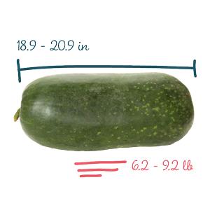 سایز کودک شما چیست؟