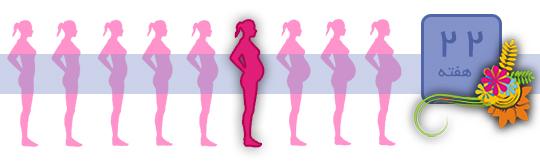 شکل جنین سقط شده چهار هفته ای هفته بیست و دوم بارداری