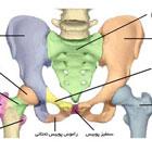 شکستگی استخوان لگن زنان، تغذیه مناسب