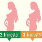 تغییرات رحم در بارداری، چگونگی تشکیل جفت