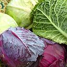 سرطان پستان، پیشگیری گیاهی را جدی بگیرید!