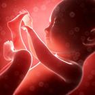 سقط جنین، بیشتر چه عاملی؟