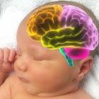 رشد مغزی نوزاد، تاثیر دوپامین