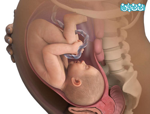 بارداری هفته به هفته، هفته سی و هفتم